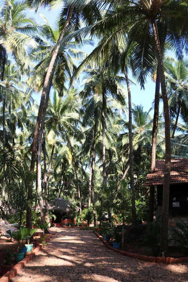 Our eco-friendly resort sits under the palms trees of Goa, offering great Patnem Accommodation.